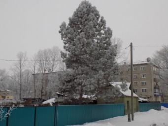 Амурзет, улица Советская